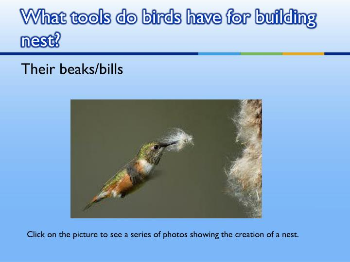 What tools do birds have for building nest?