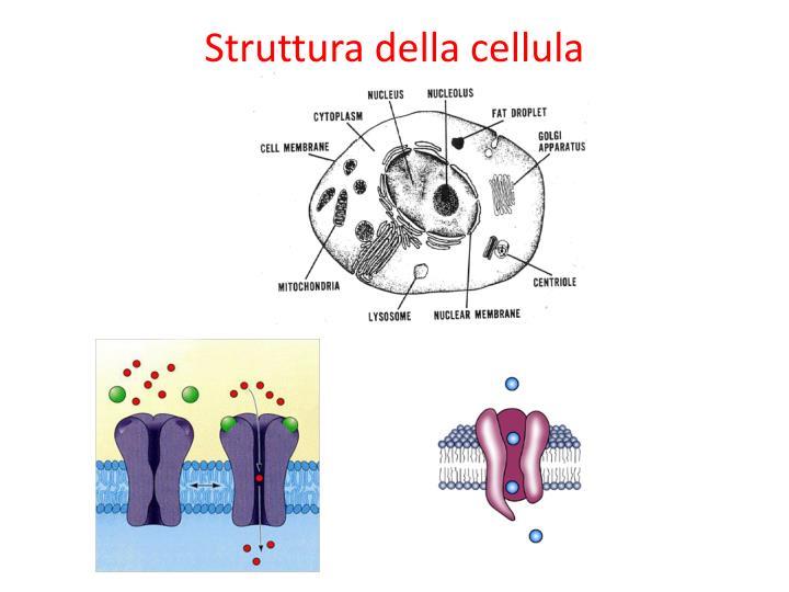 Struttura della cellula