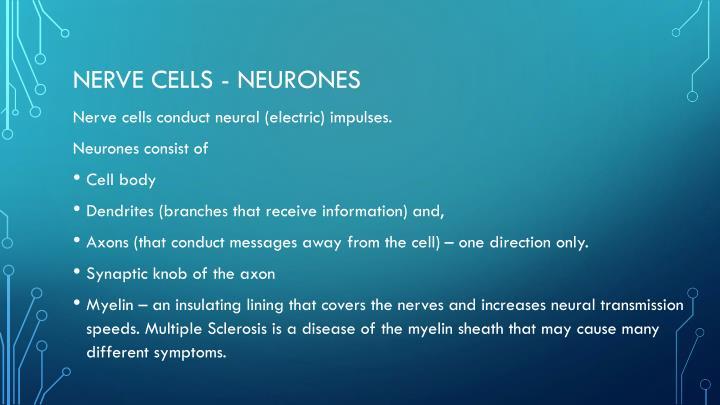 Nerve cells neurones