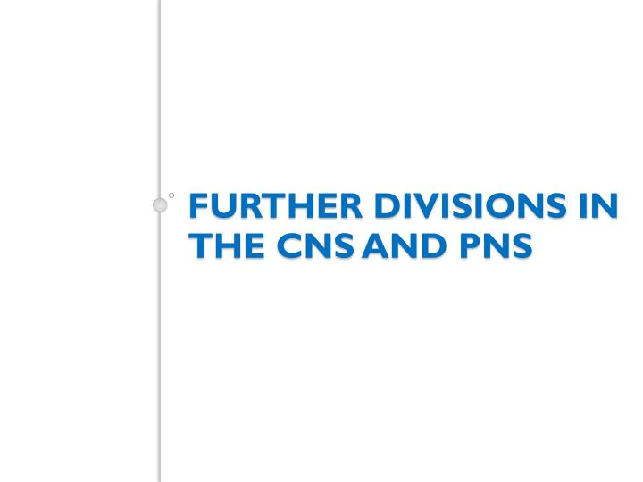 Further divisions in the CNS and PNS