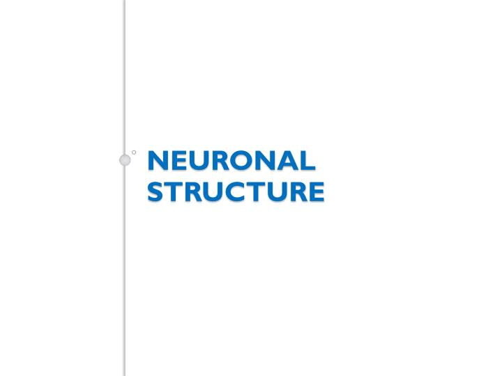 Neuronal structure