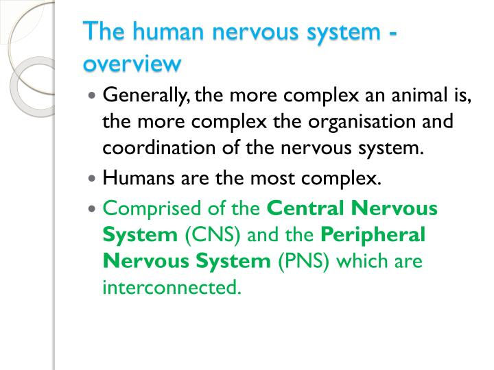 The human nervous system overview