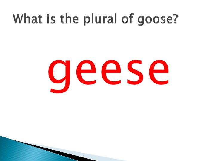 What is the plural of goose?