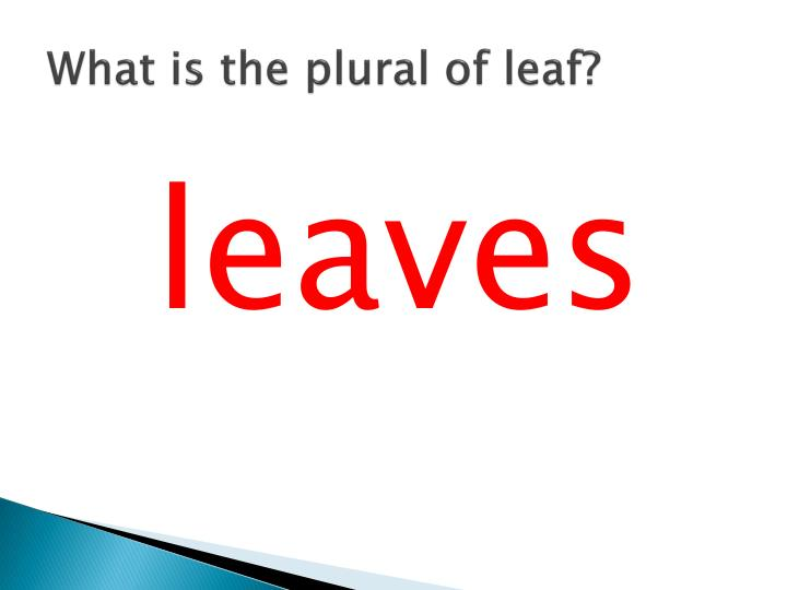 What is the plural of leaf?