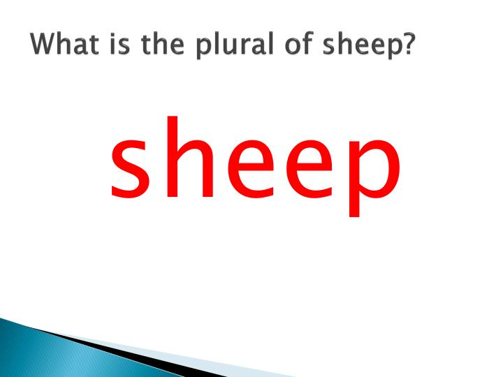 What is the plural of sheep?