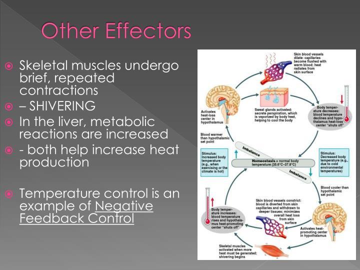 Other Effectors