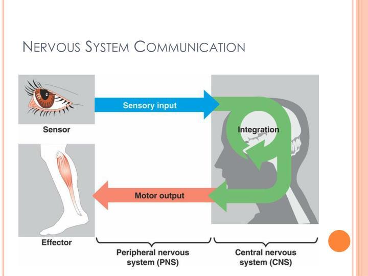 Nervous System Communication