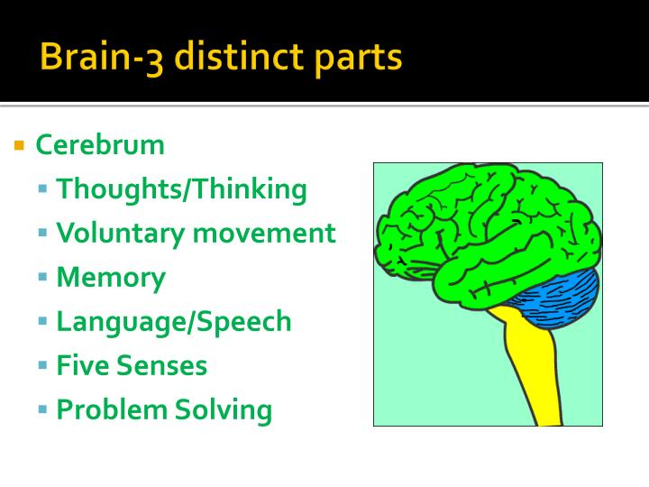 Brain-3 distinct parts