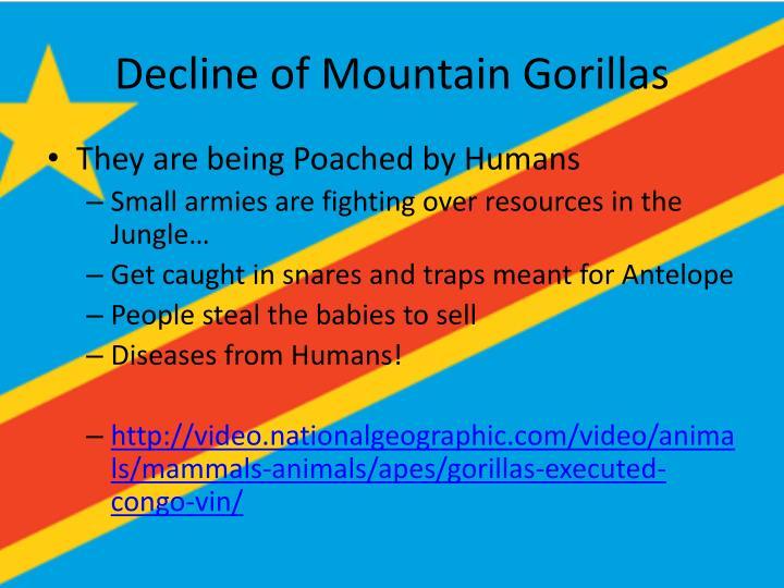 Decline of Mountain Gorillas