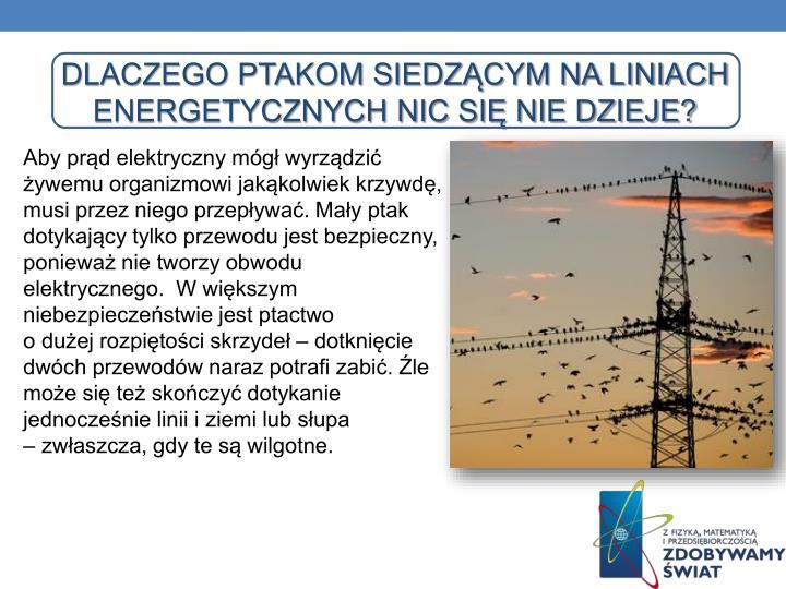 Dlaczego ptakom siedzącym na liniach energetycznych nic się nie dzieje?