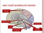 zde vid rozd len mozku