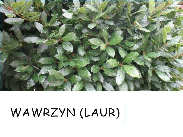 Wawrzyn (laur)