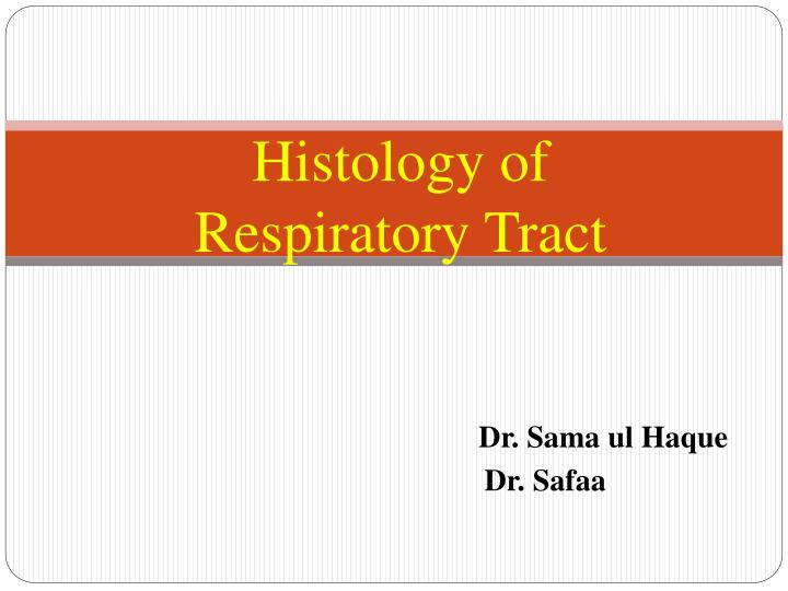 histology of respiratory tract n.
