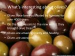 what s interesting about olives