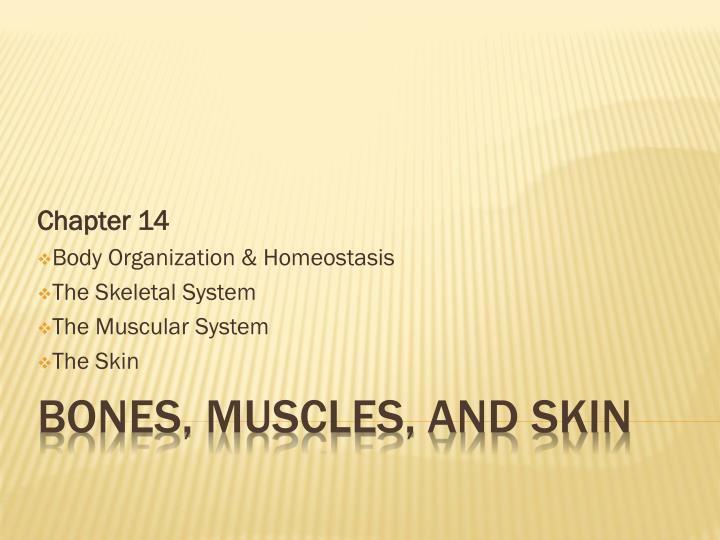 Chapter 14 body organization homeostasis the skeletal system the muscular system the skin