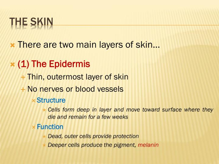 There are two main layers of skin…