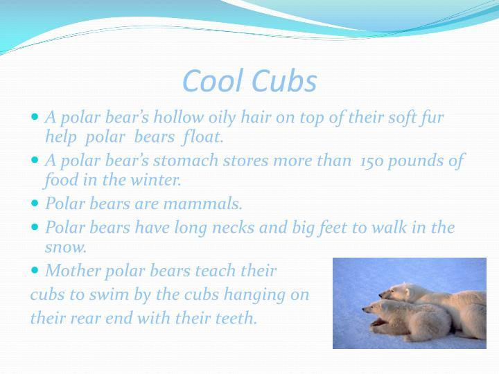 Cool cubs