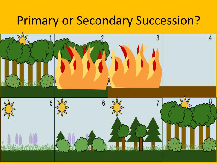 Primary or Secondary Succession?