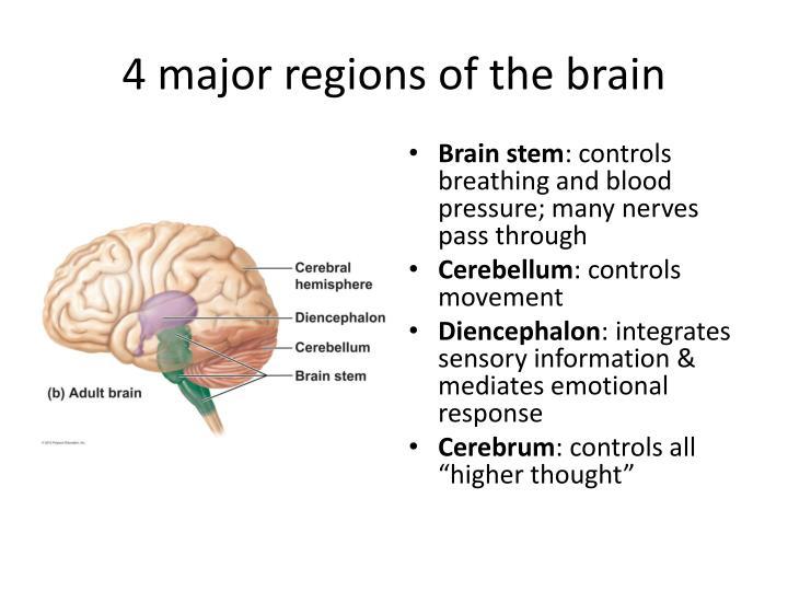 4 major regions of the brain