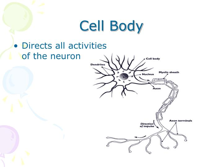 Cell Body