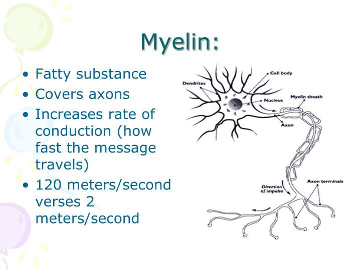 Myelin: