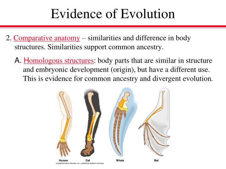 PPT - Evidence of Evolution PowerPoint Presentation - ID:2657040