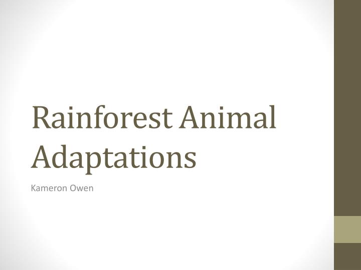 rainforest animal adaptations n.
