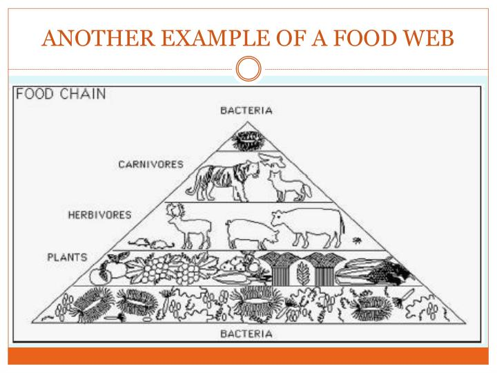 ANOTHER EXAMPLE OF A FOOD WEB