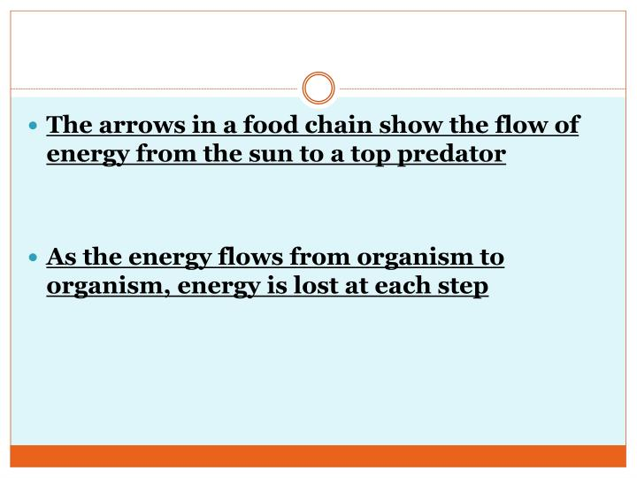 The arrows in a food chain show the flow of energy from the sun to a top predator