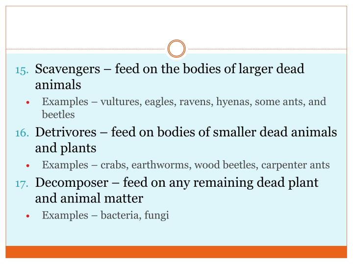 Scavengers – feed on the bodies of larger dead animals