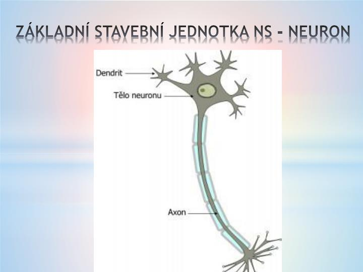 ZÁKLADNÍ STAVEBNÍ JEDNOTKA NS - NEURON
