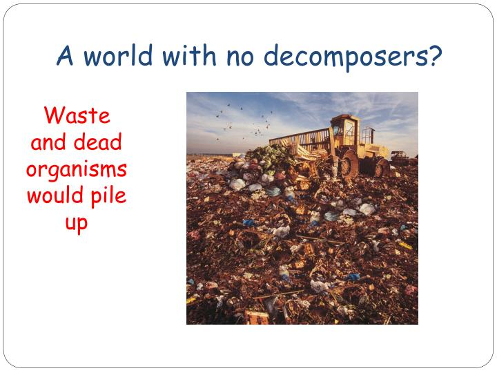 A world with no decomposers?