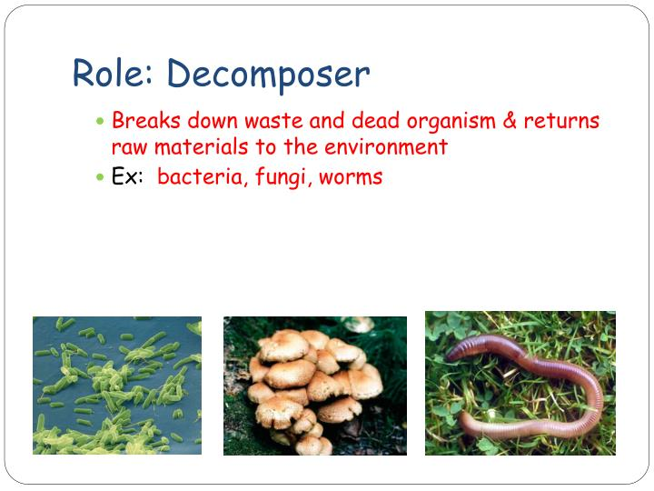 Role: Decomposer