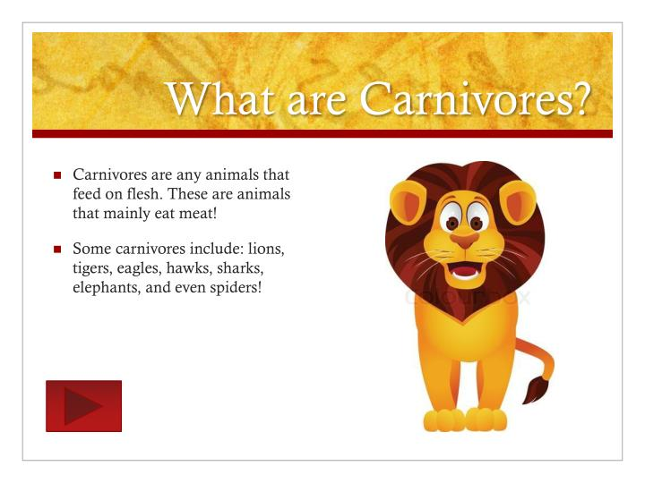 What are carnivores