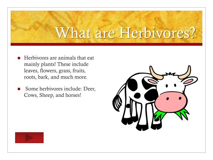 What are Herbivores?
