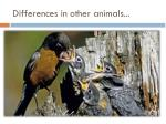 differences in other animals