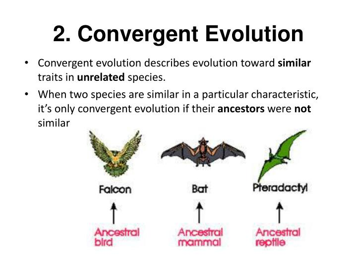 2. Convergent Evolution
