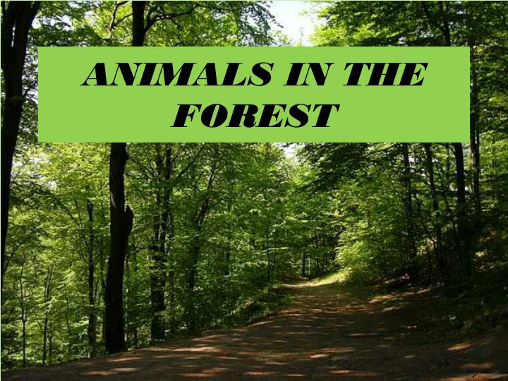 animals in the forest n.