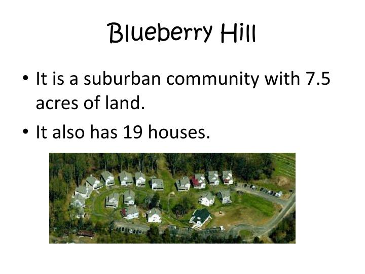 Blueberry hill2