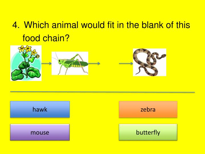 Which animal would fit in the blank of this