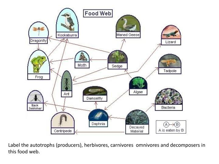 Label the autotrophs (producers), herbivores, carnivores  omnivores and decomposers in this food web.