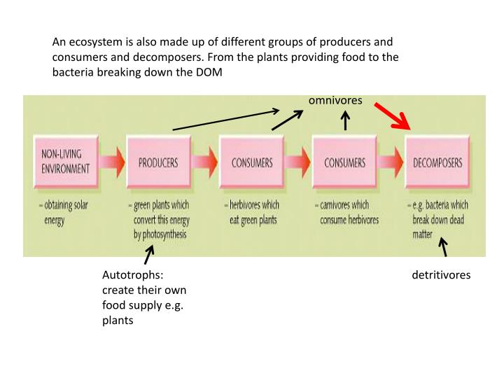 An ecosystem is also made up of different groups of producers and consumers and decomposers. From the plants providing food to the bacteria breaking down the DOM