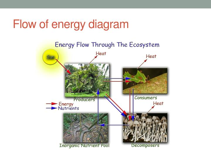 Flow of energy diagram