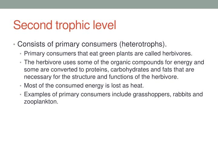 Second trophic level