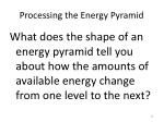 processing the energy pyramid