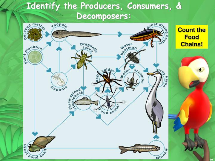 Identify the Producers, Consumers, &  Decomposers: