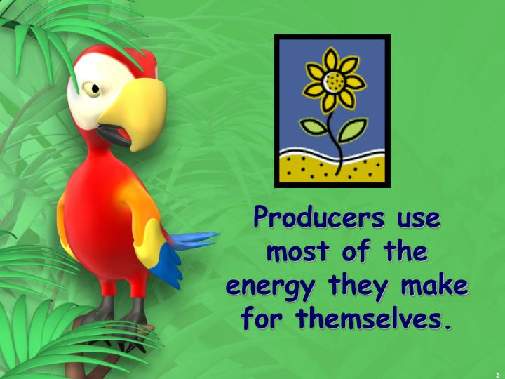 Producers use most of the energy they make for themselves.