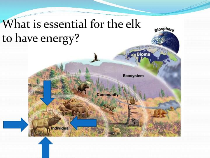 What is essential for the elk