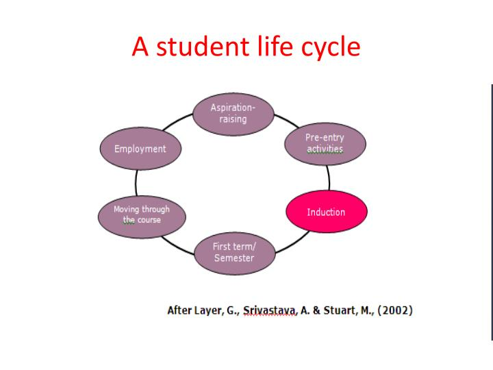 a student life cycle n.