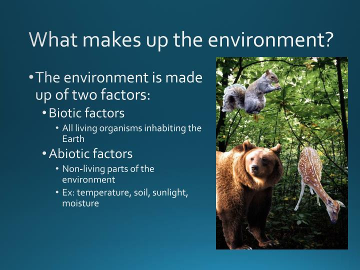 What makes up the environment